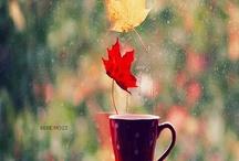 Autumn / by Christine Joseph