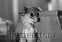 Puppy Love / by Shutterstock