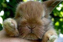 Cute! / by Tim Watkinson