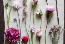Garden Design / by Kate Ward Design