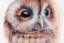 Owls / by Faith Raider