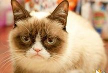 For the Love of Grumpy Cat... / Little Tardar Sauce / by Joanna Williams