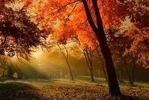 Falling Colors / Autumn ...one more proof that there Is a God and He Does love us! / by Joanna Williams