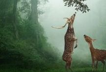 In a Land of Woodland Creatures... / by Joanna Williams