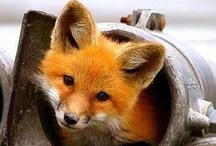 Foxy Love! / by Amy Morris Shalosky