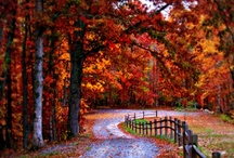 A Fall Feeling / by Kathleen Golden