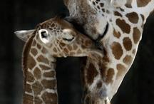 Animals I love / by Lori Ruela-Alba