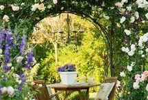 Garden Envy / by Liesl Garner