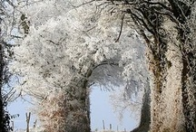 Secrets in Trees and Stones / Various rock walls and hidden passageways / by Liesl Garner
