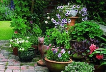Delightful Gardens / by Cary Underwood