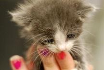 Kitties / by Yvette Kia Robinson