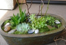 Plants / by Rhonda Mayfield