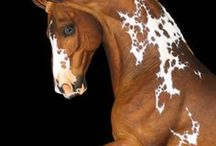 horses / by Maggie Don Carlos