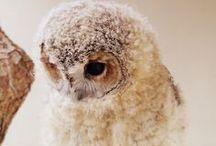 Owls / by Maja Bubanj