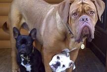 Dogs I love / by Holly Bibb
