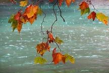 Seasons - Autumn / by Anna Caicco Dupuis