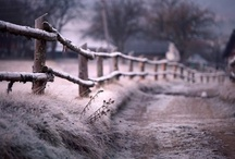 Winter / by Margie McCoin