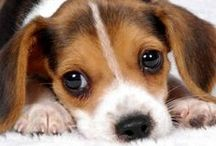 Animals we help! / by PCRM Physicians Committee for Responsible Medicine