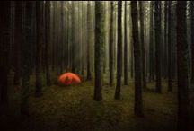 Camping / by Nicole Stokes Herrin