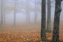 Autumn / by Nicole Stokes Herrin