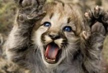 Animals / I'm in love with animals, all of these photographs are too adorable not to pin! / by Lisa Marie Knoll