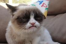 grumpy cat is my lover / by Heather Barnes
