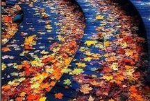 Autumn / by Faith O'Connor
