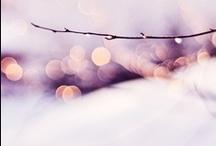 * W i n t e r  | C h r i s t m a s * / Let It Snow * Happy Christmas / by Jill Bridgeman