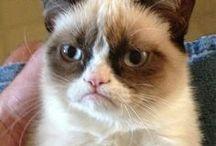 * Grumpy * Cat * / by Ashley Krager