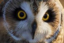 Owls / by Rita Monk