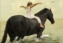 Because this is what I want to do with my life / Horses / by Aja Villanueva