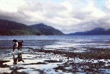 Orcas Island, Washington / by Amanda Tarkington
