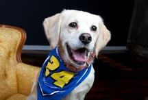 #FurryFans  / A board dedicated to celebrating our Furriest Fans!  / by Hendrick Motorsports