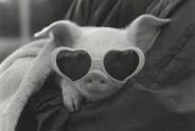 How Cute / Paris Hilton and cute baby animals - so adorable! / by Paris Hilton