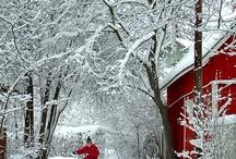 winter / by Marsha Blatchford