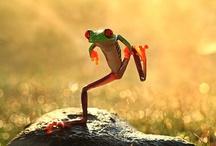 Frogs / by Tammy Tatsch