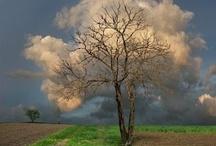Beautiful Captures / by Nico Crisafulli