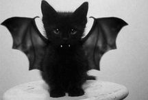 Bats&Cats / by Julia Rawnsley