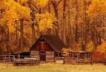 Autumn Splendor / by Jamie Roy