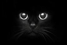 Black Cat / by Lisa Granados