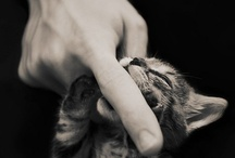 Puppies + Kittens / by Kathy C.