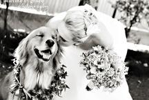 +wedding bells+ / by Michela Bowman
