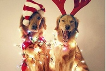 +holidays+ / by Michela Bowman