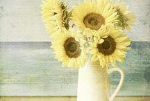 Sunflowers / by Teija M