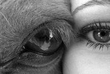 Horses / by Eileen Syler