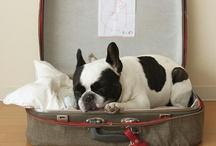 French Bulldog / by Tabby Powell