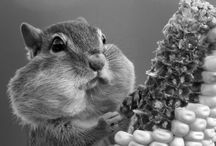 squirrels just want to have fuh-un... / i have a neighborhood full of them... i might as well learn to appreciate these little critters... / by Mary Beth Burrell
