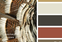 Color Palettes / by Kaleigh Morris