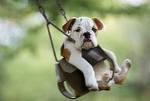 Cute Overload. Everything Pets & Animals. / Find cute animal pictures, funny pet images and great coupons and deals for your furry family member here!  / by DealsPlus Deals and Coupons