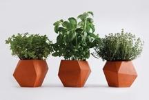 DIY // Urban Gardening / by Hillary Brown